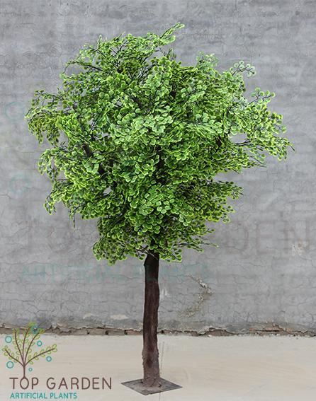 עץ גינקגו