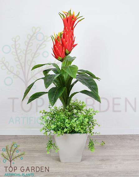 צמח אקזוטי
