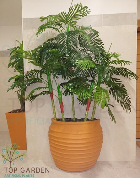 עץ דקל ננסי