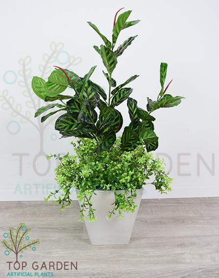 צמח טווס