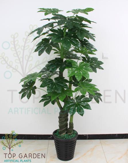 עץ ננסי